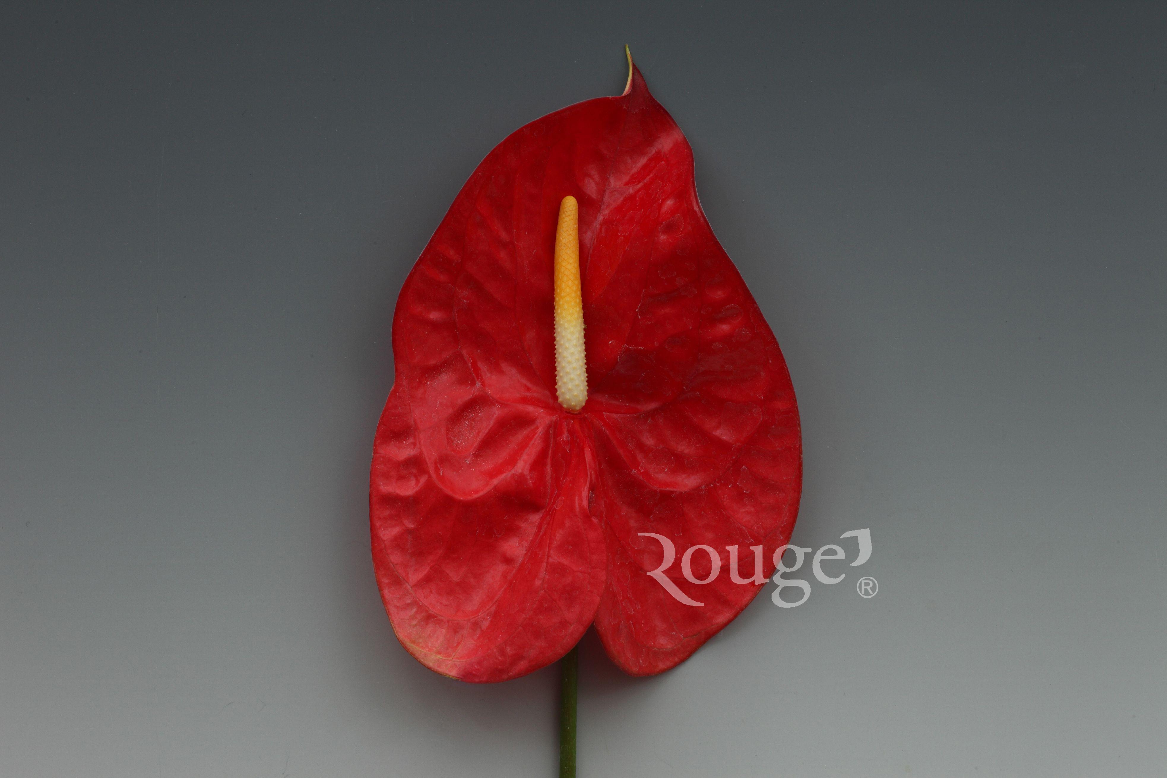 Agate  Gorgeous